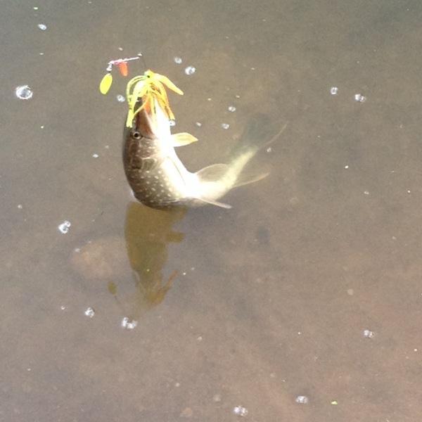 A photo of Bruce  Sachtleben 's catch
