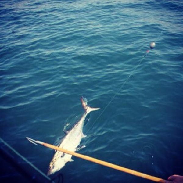 A photo of reelin_em_n's catch