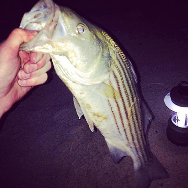 A photo of jake_trow's catch