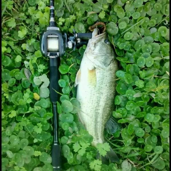 A photo of Ignacio's catch