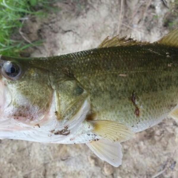 A photo of saltyrocket's catch