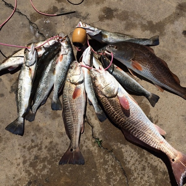 A photo of txsmith1's catch
