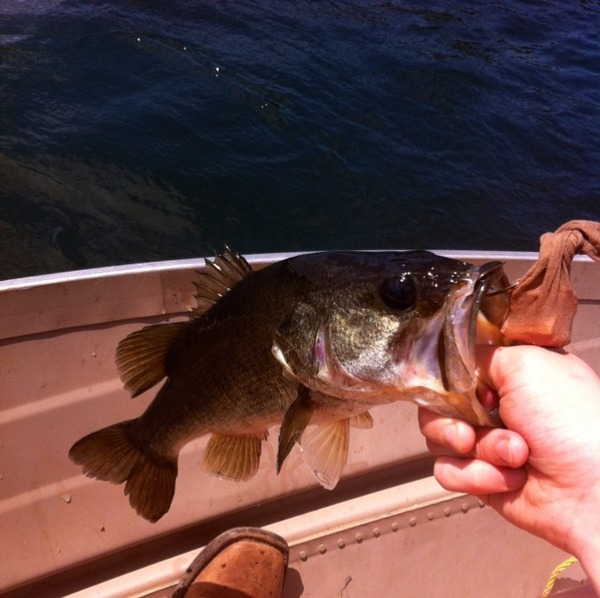 A photo of Powers911's catch