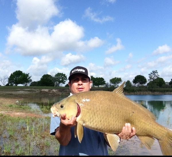 A photo of Rickerstaf's catch