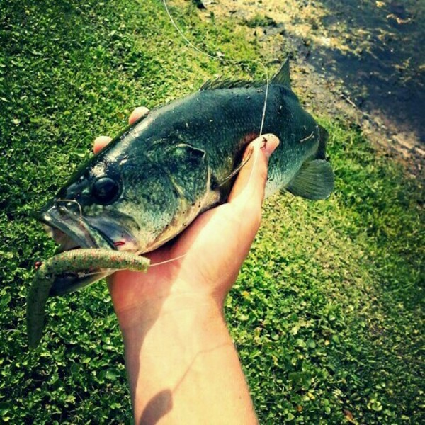 A photo of Christian  Cisar's catch