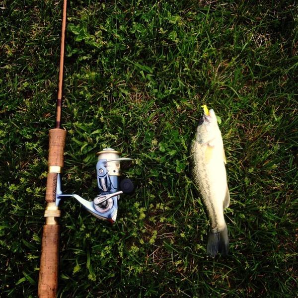 A photo of crookcody19's catch