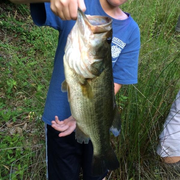 A photo of Bassfishinboy11's catch