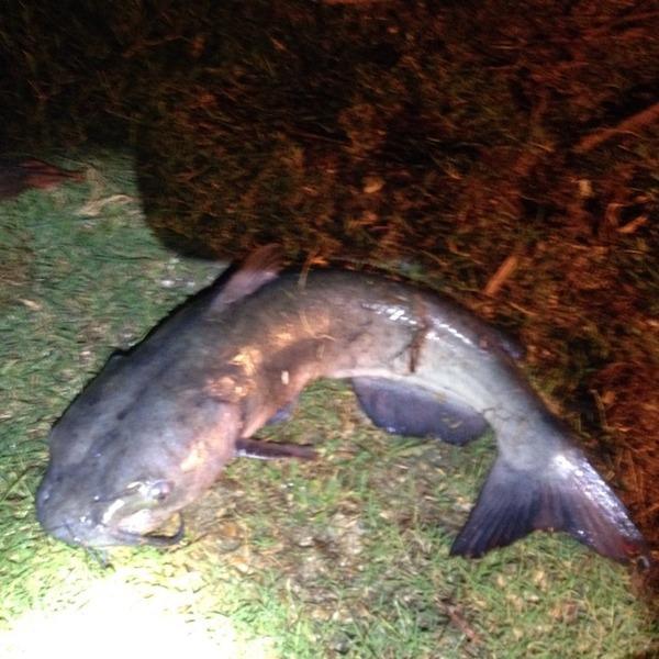 A photo of Esgar Montalvo's catch