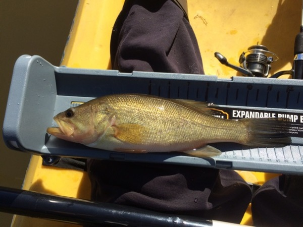 A photo of ReddenD's catch