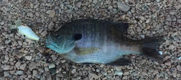 A photo of Lucas McQuiston's catch