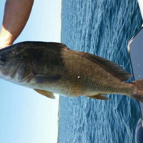 A photo of DouglasMD's catch