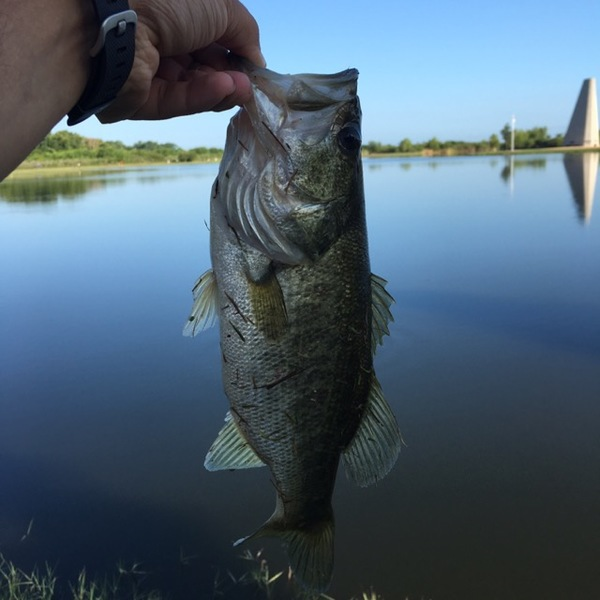 A photo of MShine89's catch