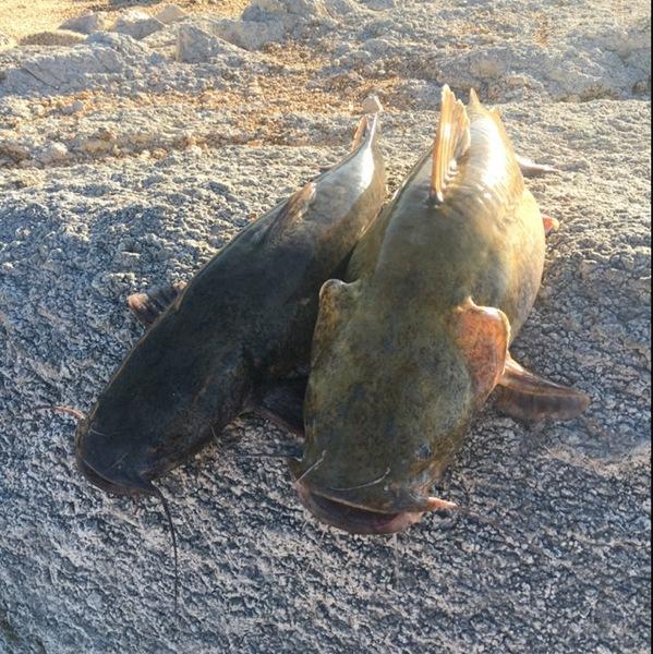 A photo of dallin dallin's catch