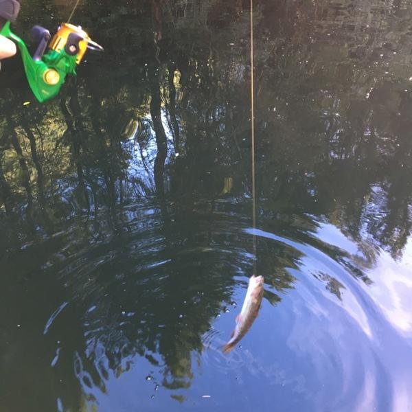 A photo of Erin Brunton's catch