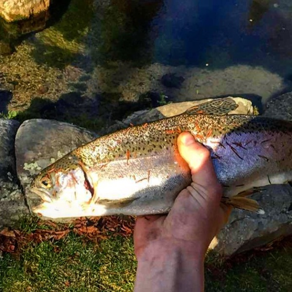 A photo of Thomas Gyory's catch