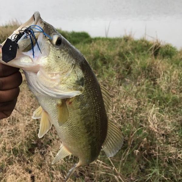 A photo of texasfishingkid kid's catch