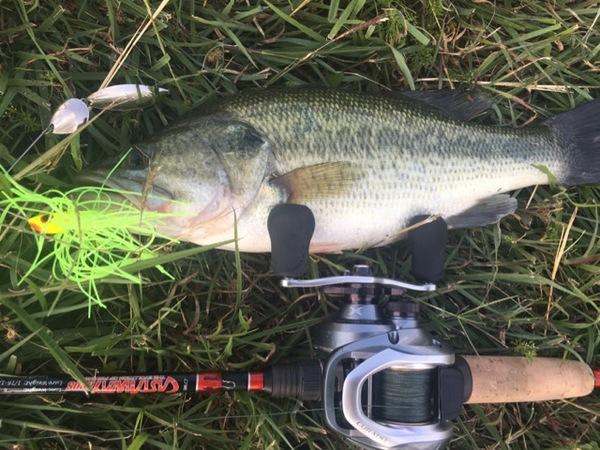 A photo of brandon5337's catch