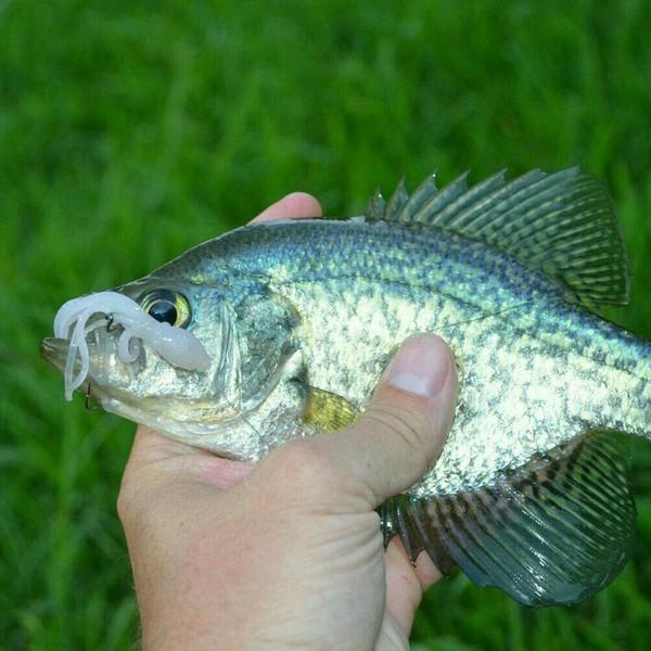 A photo of Scott B's catch