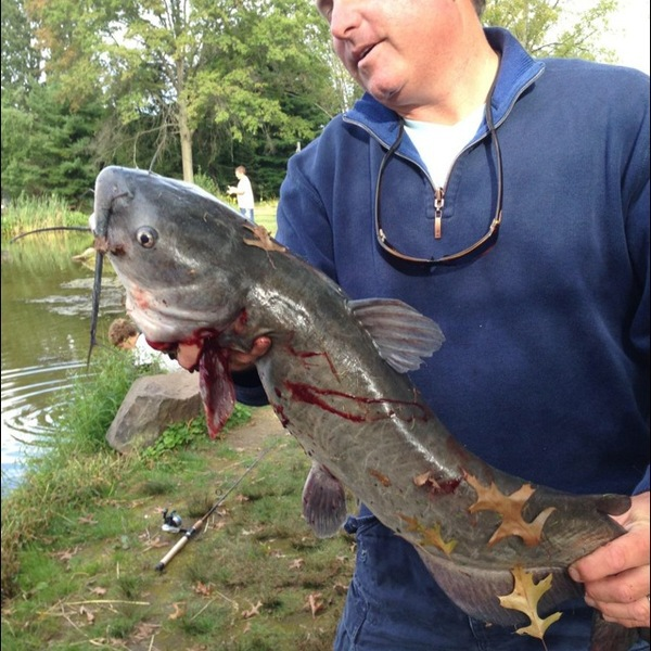 Harris Pond NH Fishing Reports, Map & Hot Spots