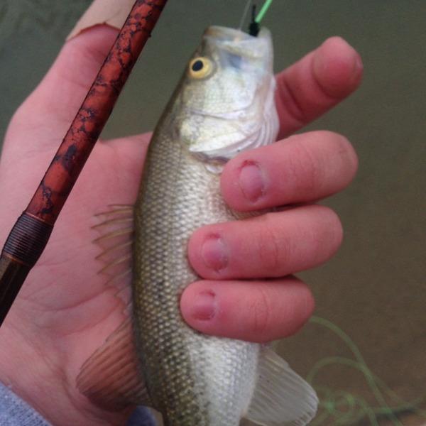 Llano River TX Fishing Reports, Map & Hot Spots