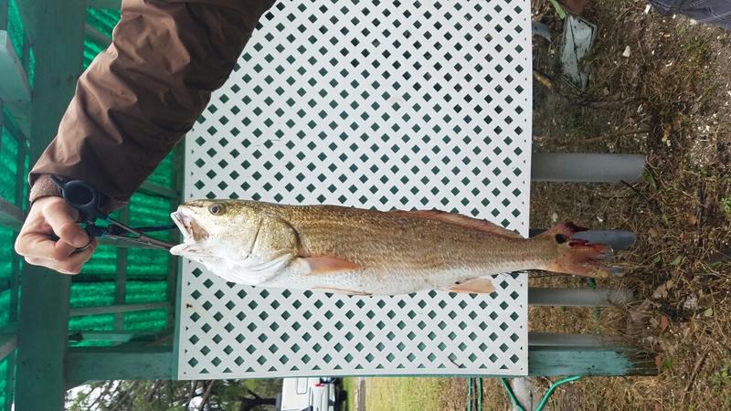 A photo of Casper Ponce 's catch
