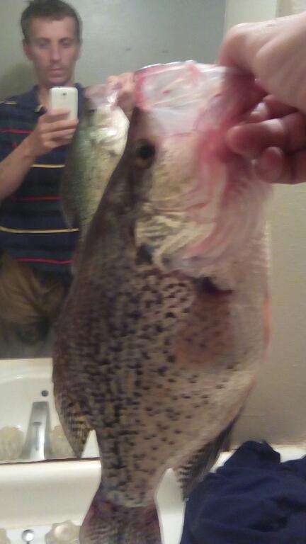 A photo of dima sitnik's catch