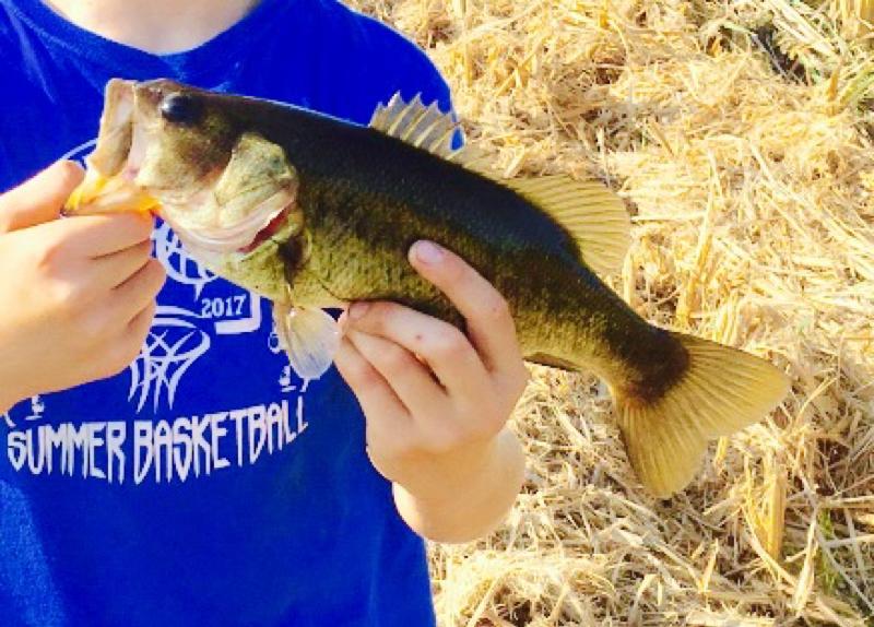 A photo of Luke  Kelly's catch