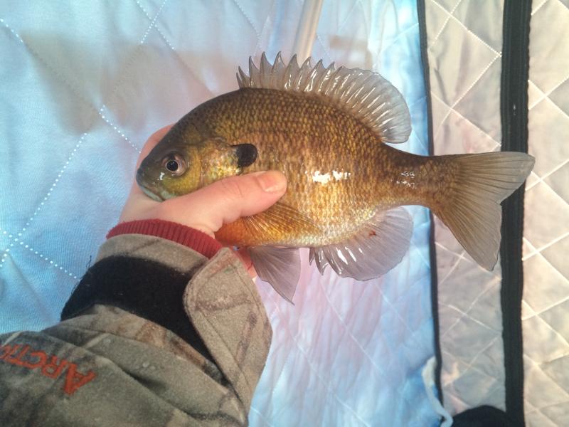 A photo of Gabrielle  Weber 's catch