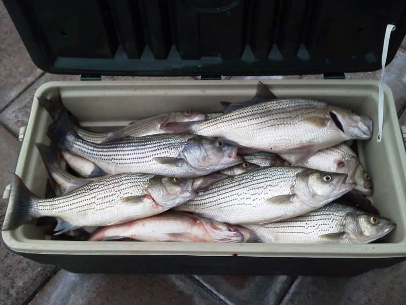 A photo of Tony Shepherd's catch