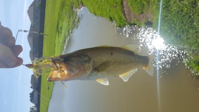 A photo of John Fitch's catch