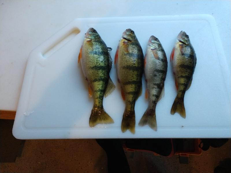 A photo of Jacob Reinecke's catch