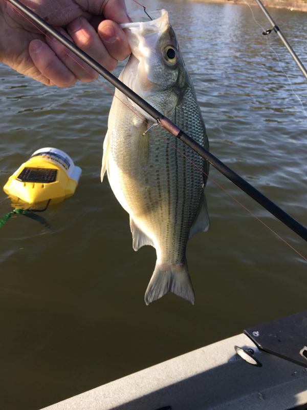 A photo of Ken King's catch
