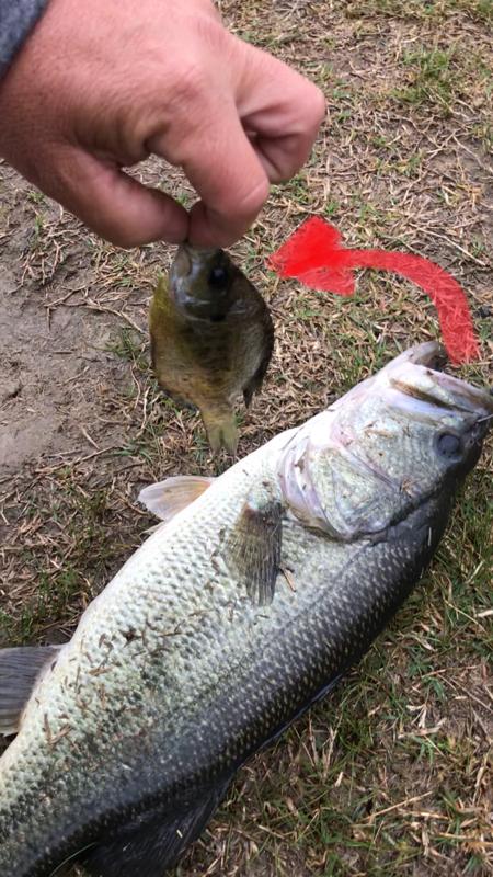 A photo of David Hilton's catch