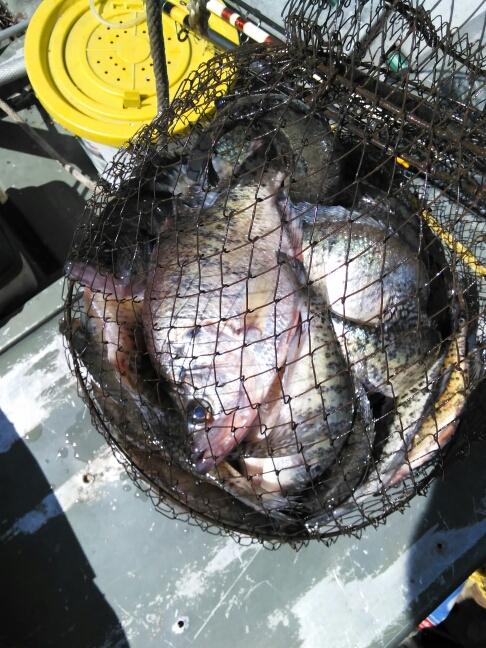 A photo of Rambo Robertson 7 Robertson 's catch
