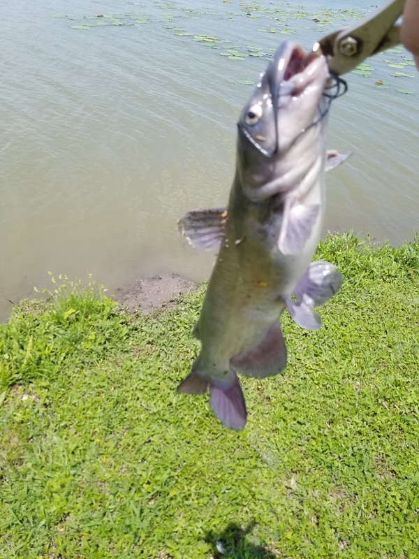 Lake ray hubbard tx fishing reports map hot spots 3mos ago lake ray hubbard blue catfish with a weedless silver 2 in spoon publicscrutiny Images
