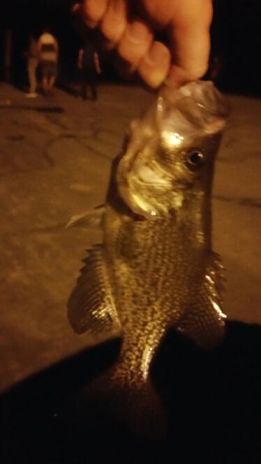 A photo of Dale Massman's catch