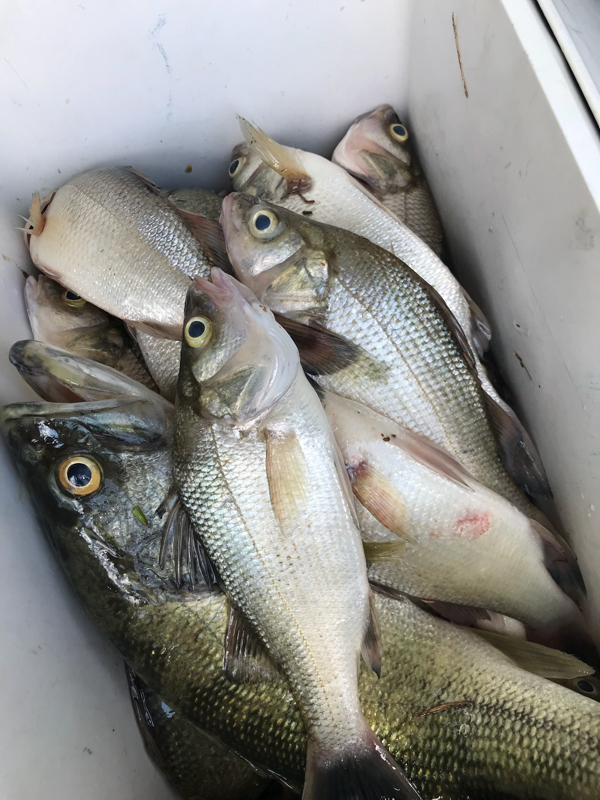 A photo of Brian Terrell's catch