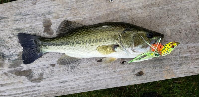 A photo of Douglas Ward's catch