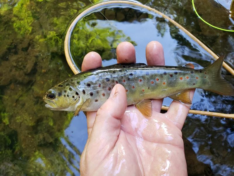 A photo of Alan Koop's catch
