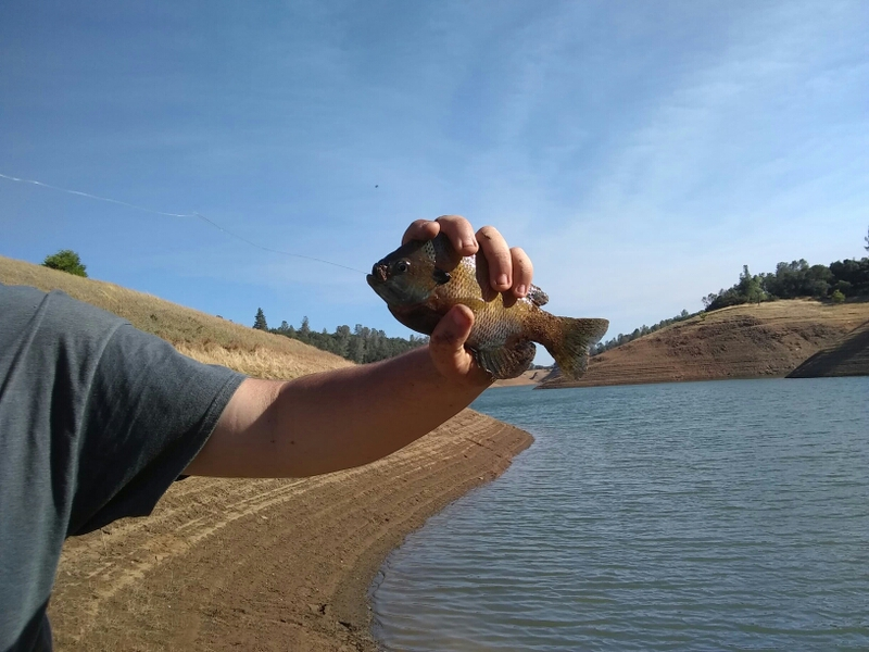 Lake Oroville CA Fishing Reports, Map & Hot Spots
