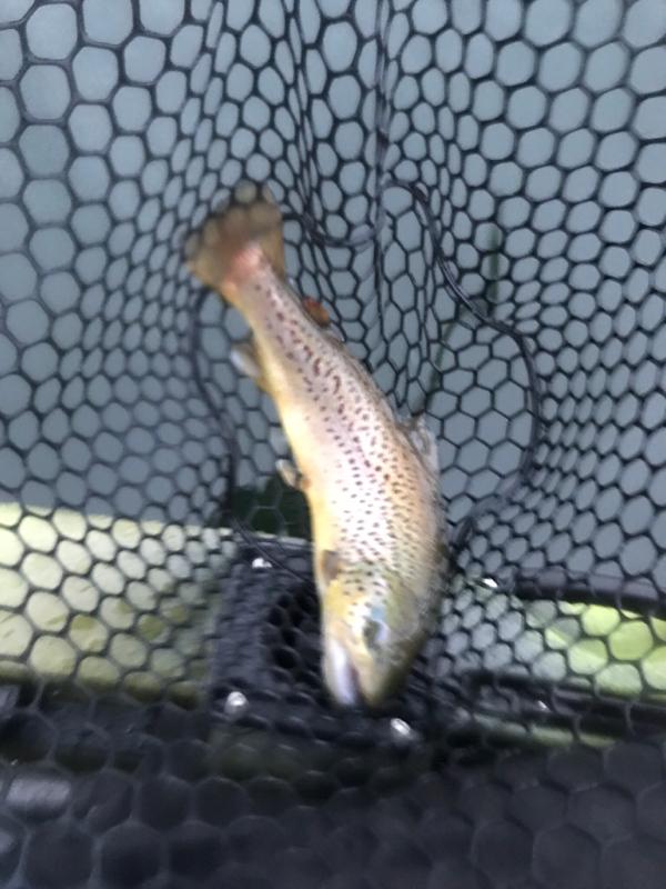A photo of Matt Rodgers's catch