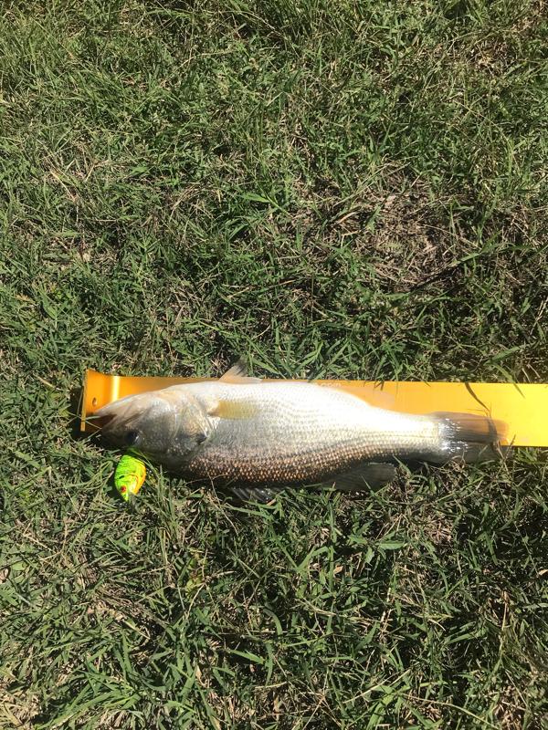 A photo of Steve  Cooper 's catch