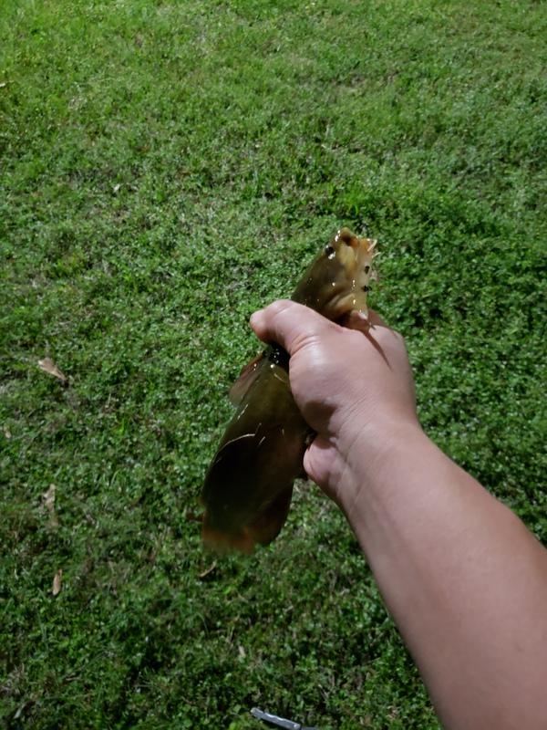 A photo of Joe Vu's catch
