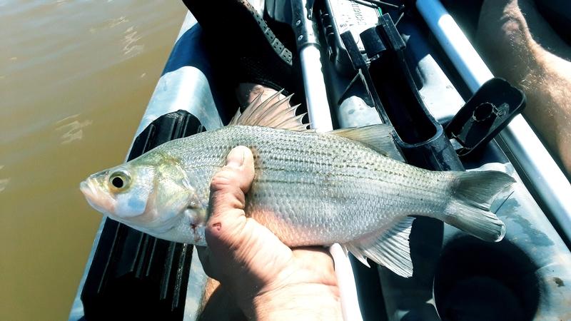 A photo of Thomas Barnhouse's catch