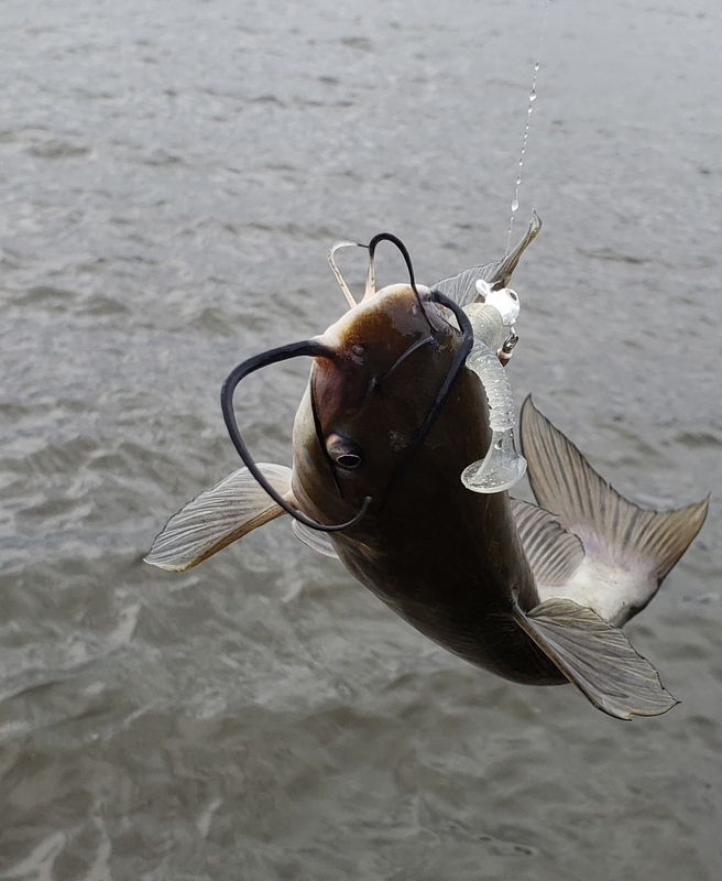 A photo of Jim Golden's catch