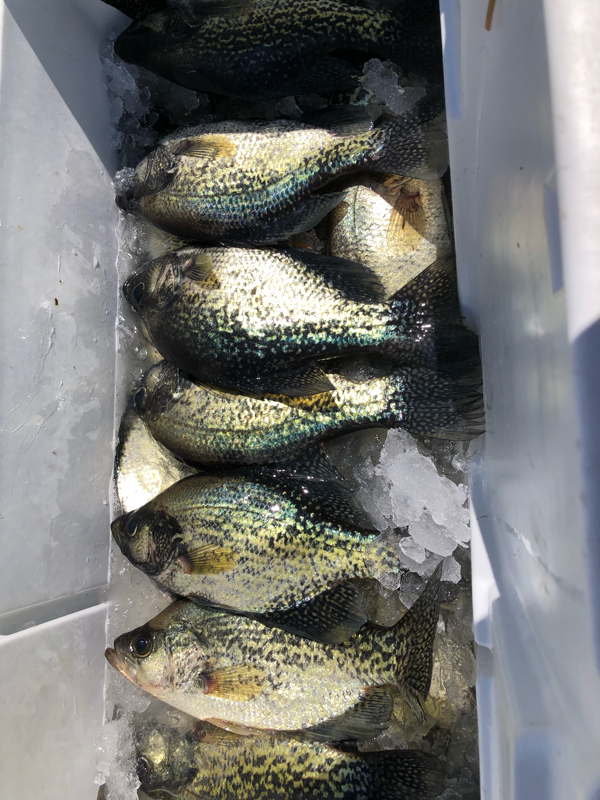 A photo of Joe Ferrario's catch