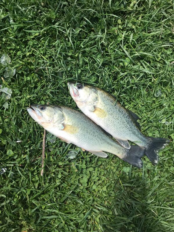 A photo of Renex  morrow's catch