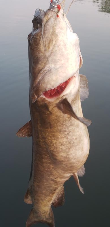 A photo of EDDIE MCCLELLAND's catch