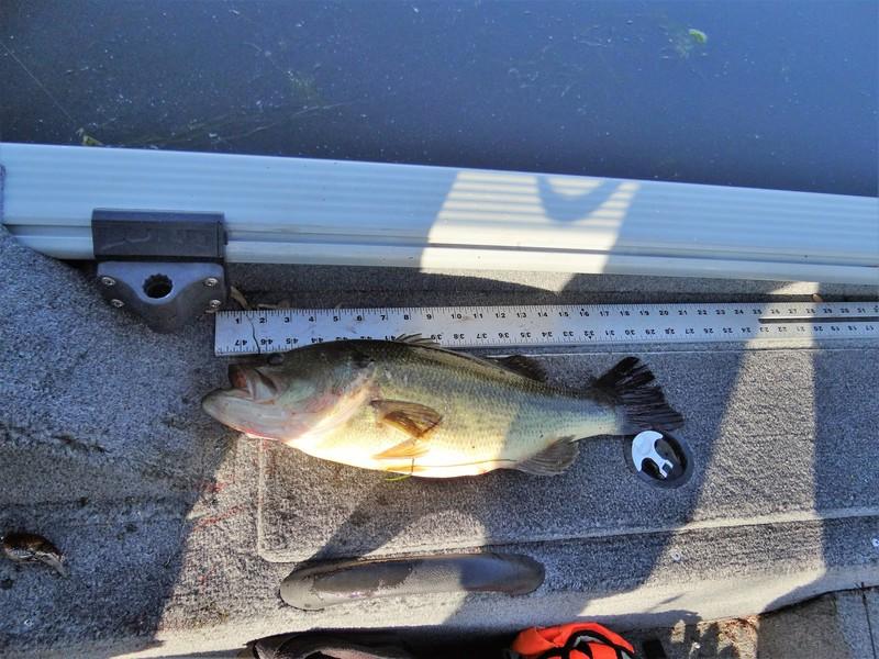 A photo of Ian Dumbleton 's catch