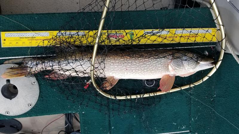A photo of Travis Bartnes's catch